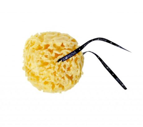5088-sponge-regular-size